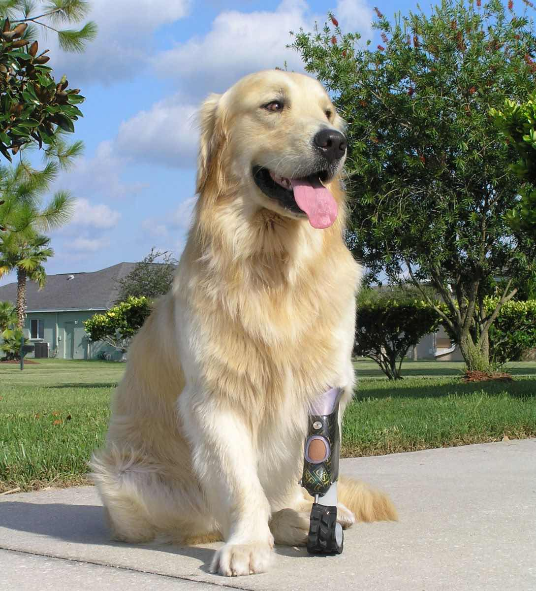 images/Dog%20With%20Prosthetic%20Leg.jpg